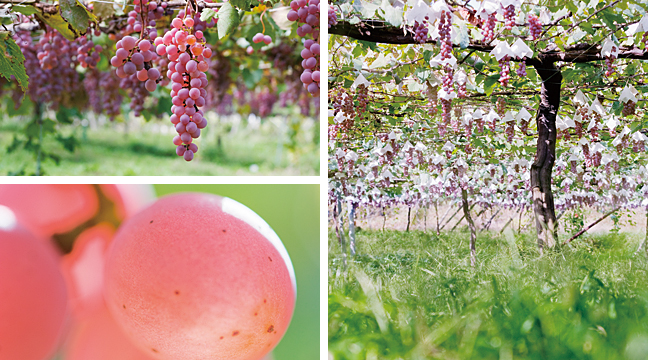 composite image of koshu grapes