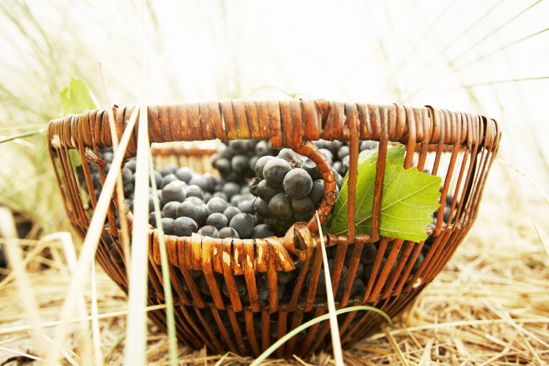Basket & grapes