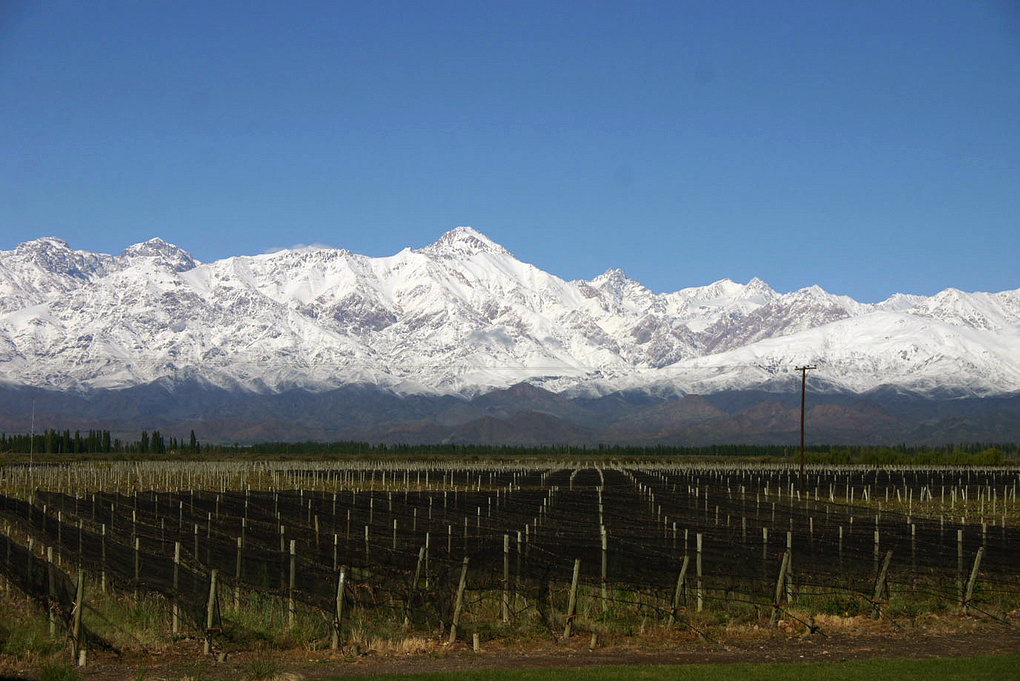 Tomsons was particularly impressed by the cooler climate wines from Patagonia