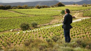 Biodynamic, organic, sustainable and natural wine