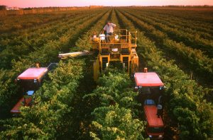 Australian wines are key to the UK wine economy