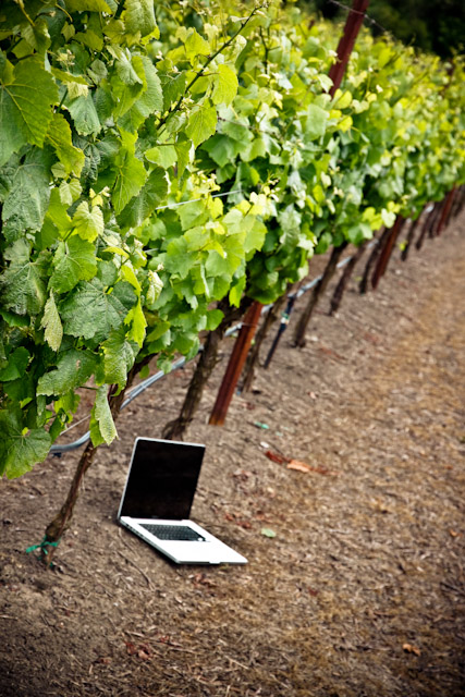 Wineries focus too much on their vines and cellars and not enough on the technology to sell and market it says Mabray