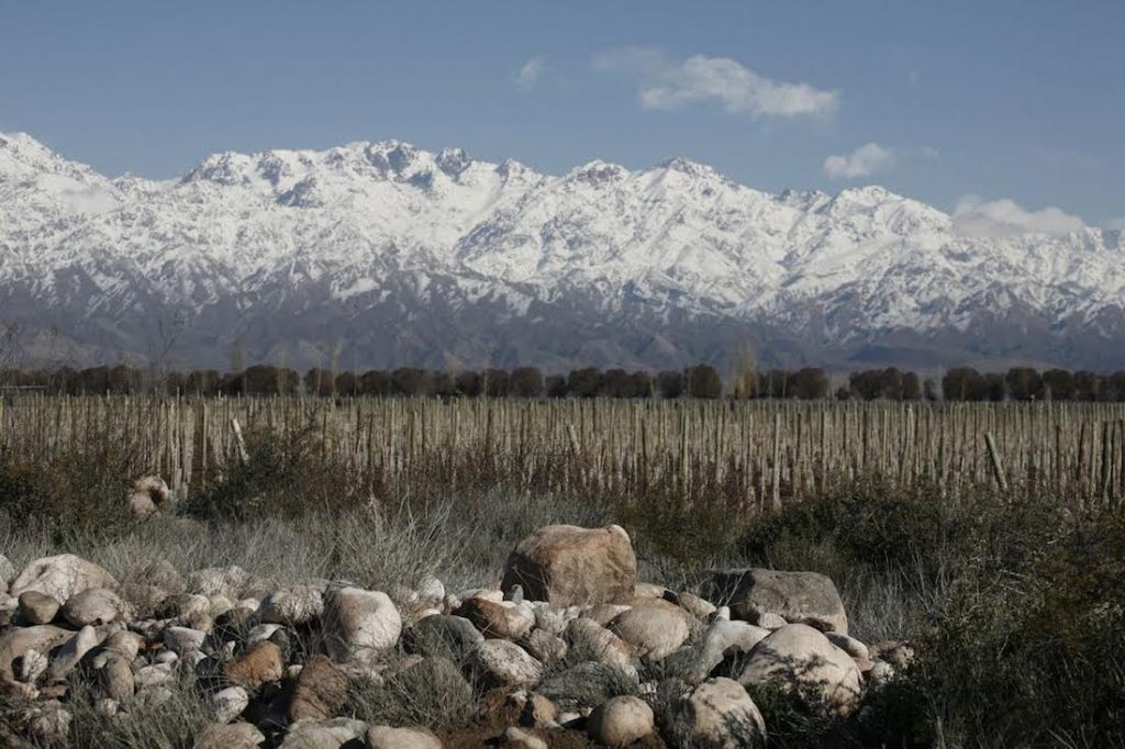 Gaucho has followed in the footsteps of Zuccardi, pictured, by planting vines in the Altamira region of the Uco Valley