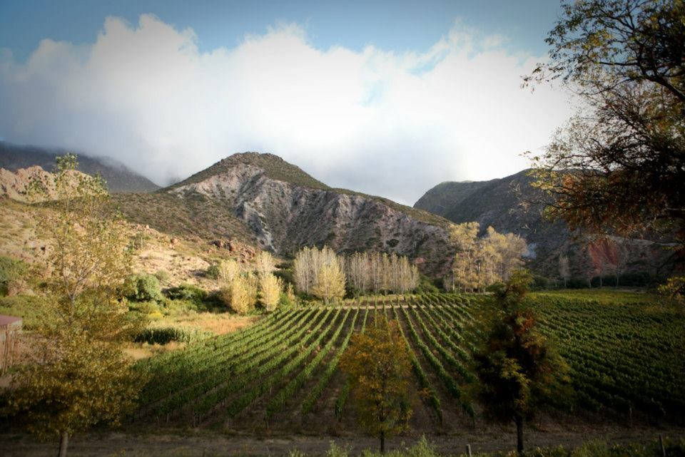 The Tacuil vineyard in Salta produces the stand out wine from Argentina for Levenson