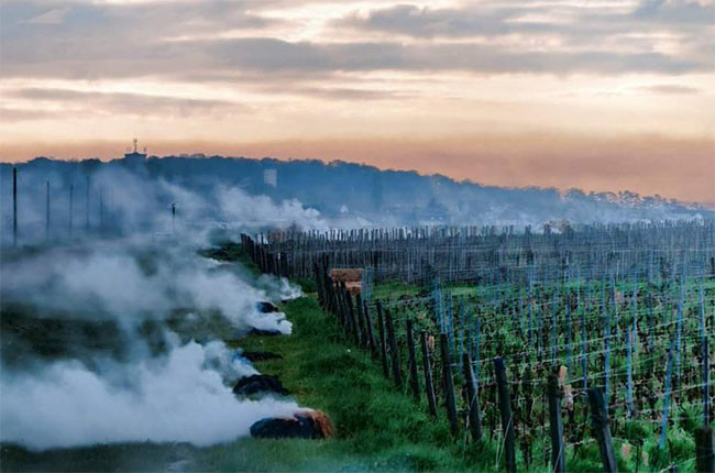 Frost has hit so many French regions in 2016 with devastating effect