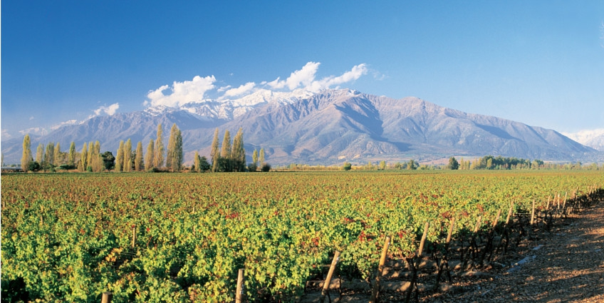 Chile's Maipo Valley is a key growing area