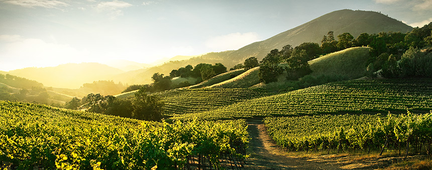 Jackson Family Wines is one of a number of premium US producers targeting the UK