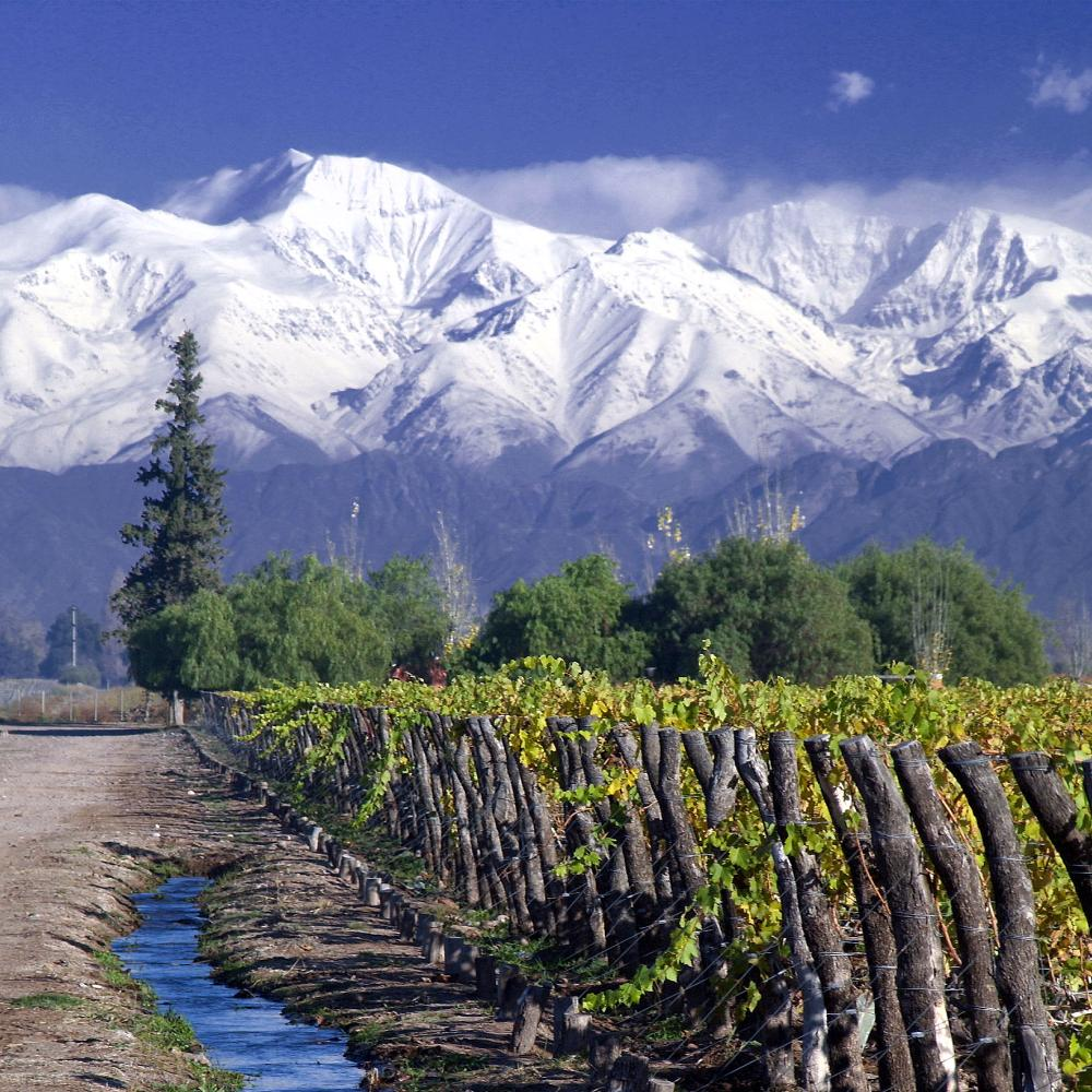 Chilean wine is now booming in China on the back of its free trade deal