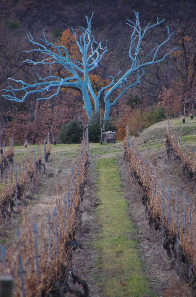 The iconic blue tree that gives the estate its name