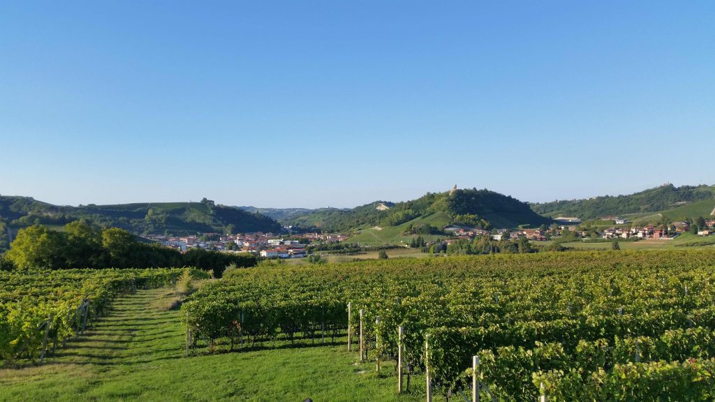 The Demaria winery and vineyards