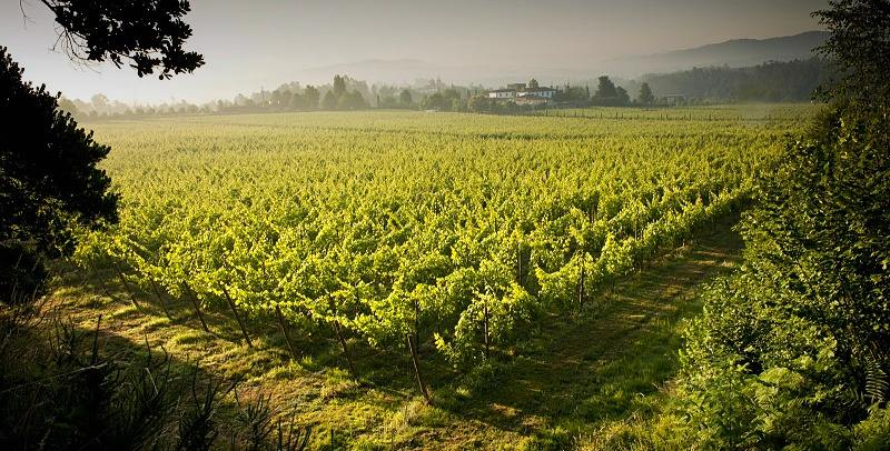 Vinho Verde is now making a wider selection of white wines