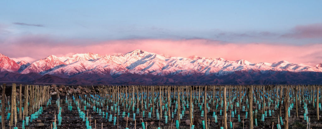The sub-regions of the Uco Valley are where some of Argentina's most exciting wines are being made