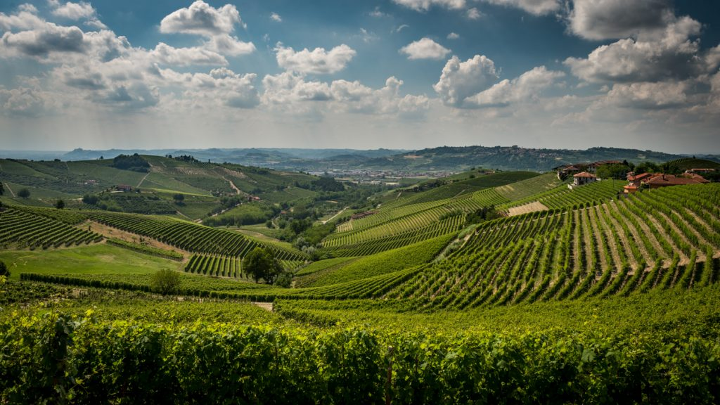 It seems you can't move for specialist UK wine importers in Piedmont