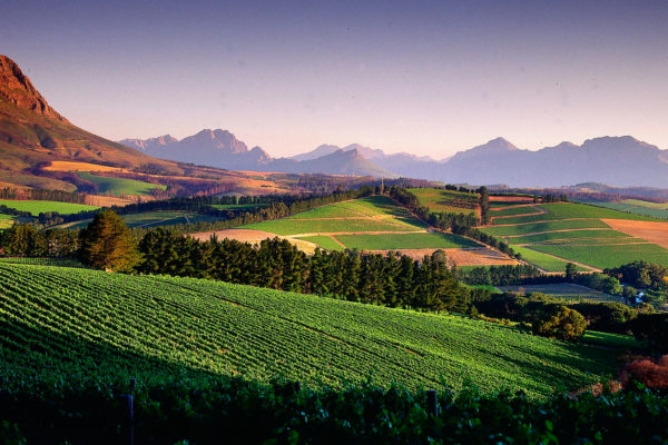 south-africa-vineyards