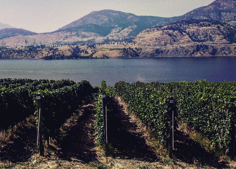 skaha-lake-from-painted-rock-winery