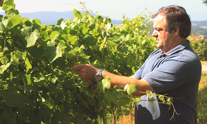 Portugal's Anselmo Mendes was the go to winemaker for Giles Cooke on holiday
