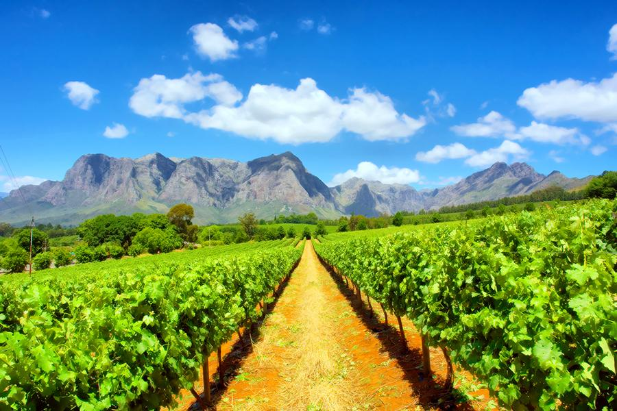 Australia would do well to look closely at how South Africa has created a real energy and excitement around its fine wines, said Dan Jago