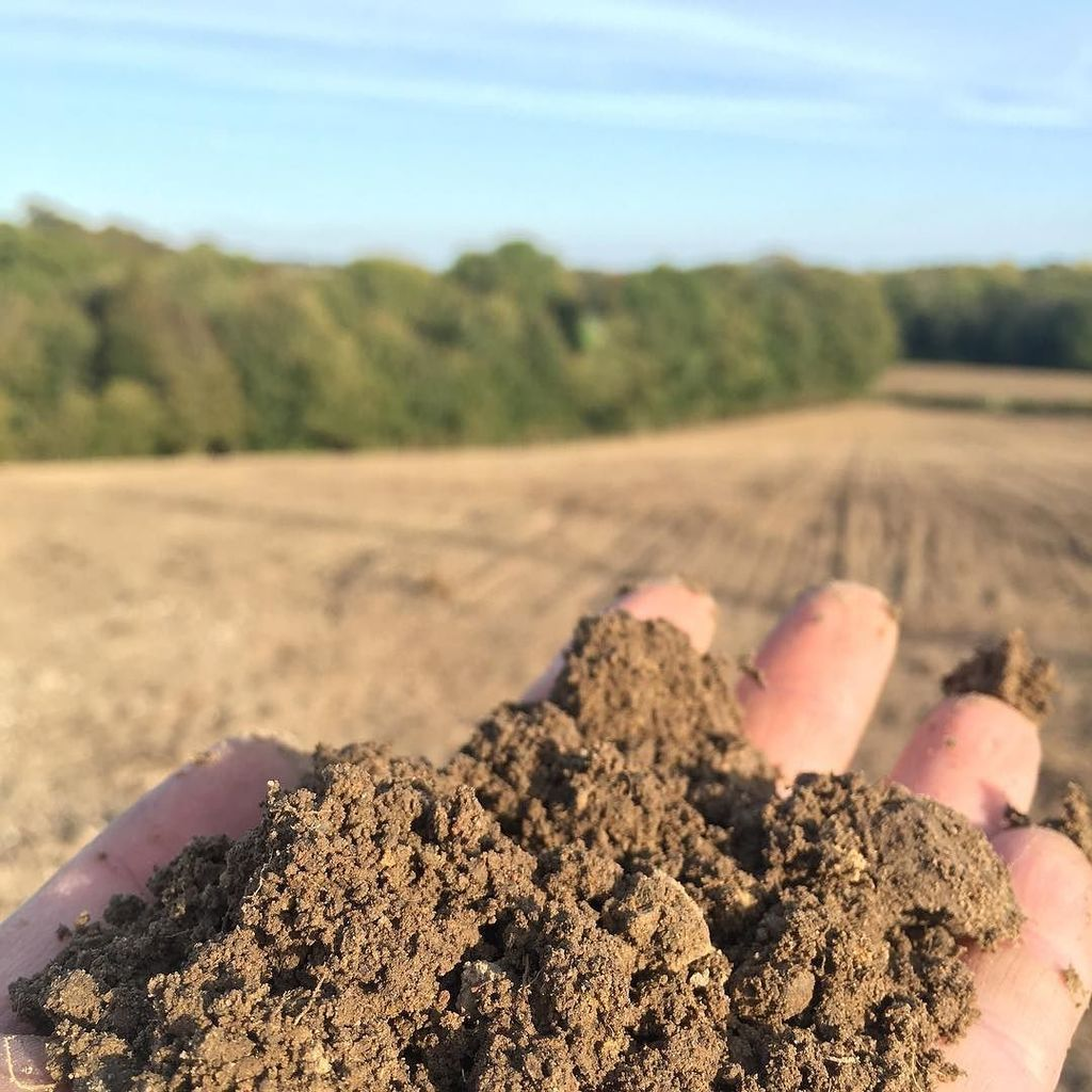 Walgate is happy to get his hands dirty with biodynamic practices