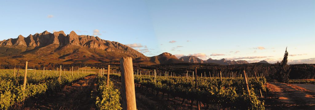 Napier Vineyards in Wellington South Africa