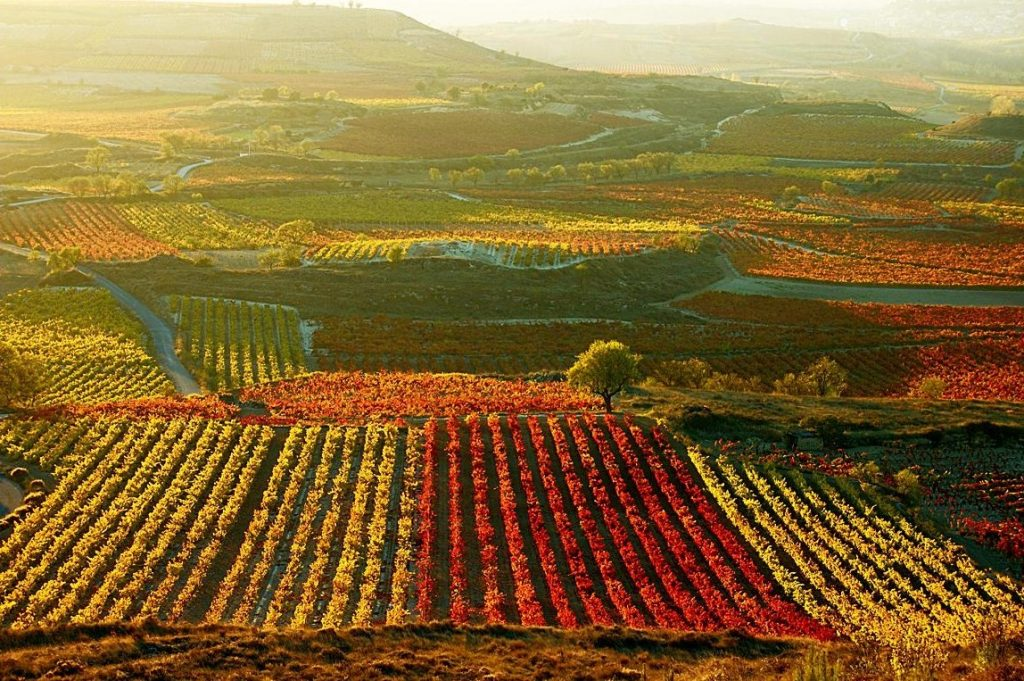 The Alavesa region of Rioja deserves special attention, says Tim Atkin MW