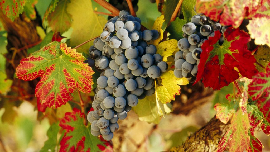 Atkin recommends spending some time better understanding the white wine styles in Rioja