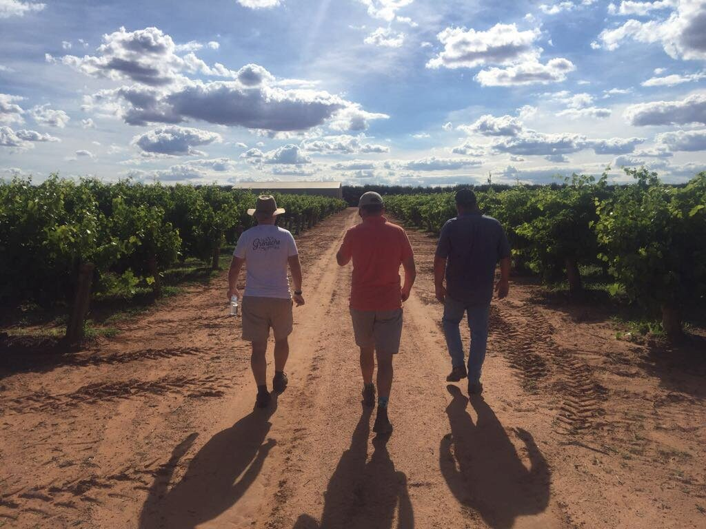 The Thistledown team walking through the vines