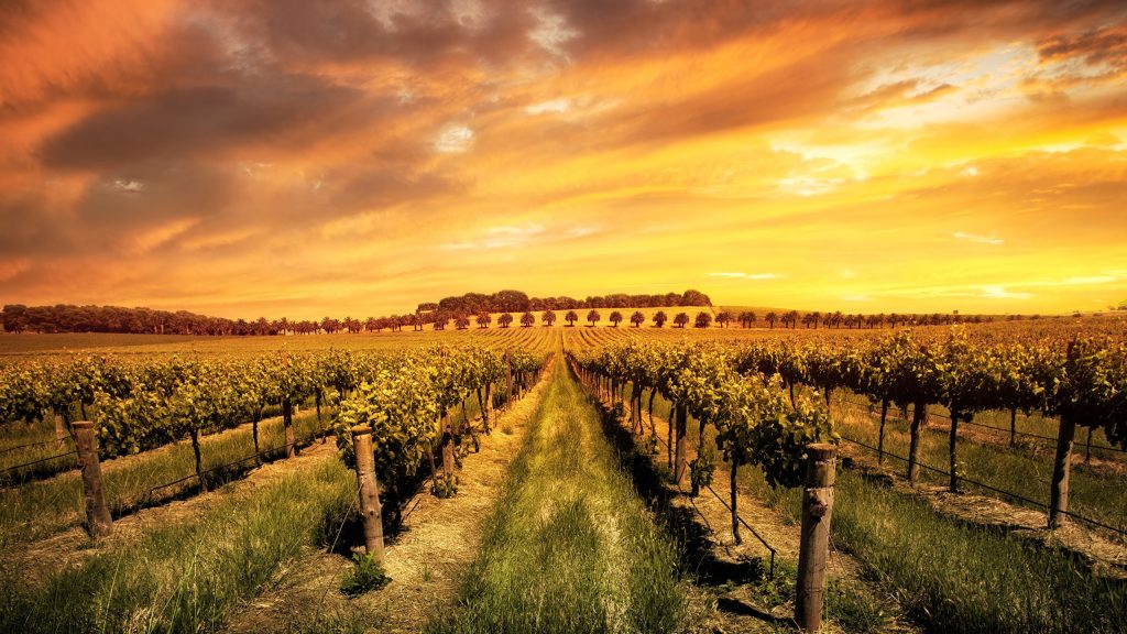 The sun is shining brightly on all premium parts of Australian wine