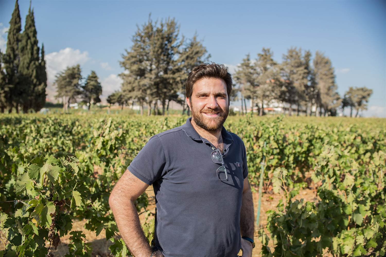 Working with the old vines at Domaine des Tourelles