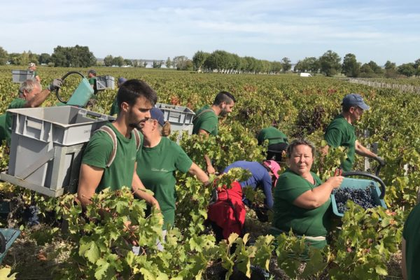 Harvesting in Bordeaux. Picture by Gavin Quinney
