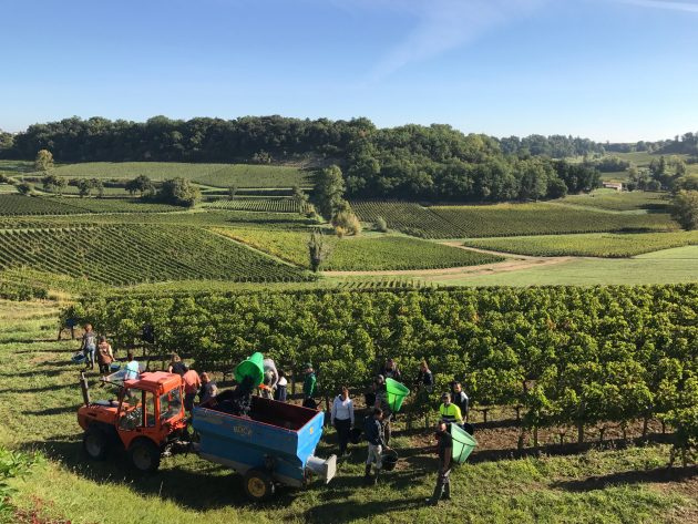 Harvest underway at Gavin Quinney's Chateau Bauduc