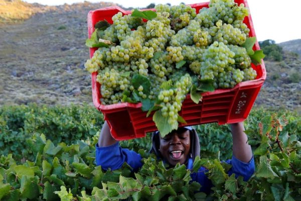With less wine to pick, and the drought still hitting yields, the lack of wine from South Africa is having a knock-on effect on pricing in other countries