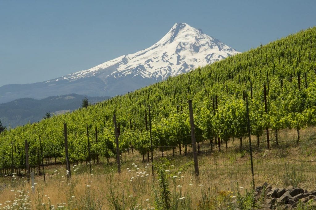 Underwood Vineyard, Columbia Gorge AVA, Washington