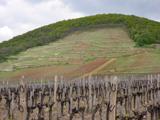 Seek and thy shall find: The Barta vineyards are on the steep slopes of King's Hill