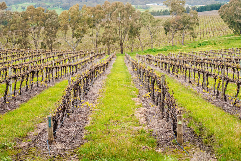 Jukes singles out regions such as the Adelaide Hills for its ability to produce quality Chardonnay