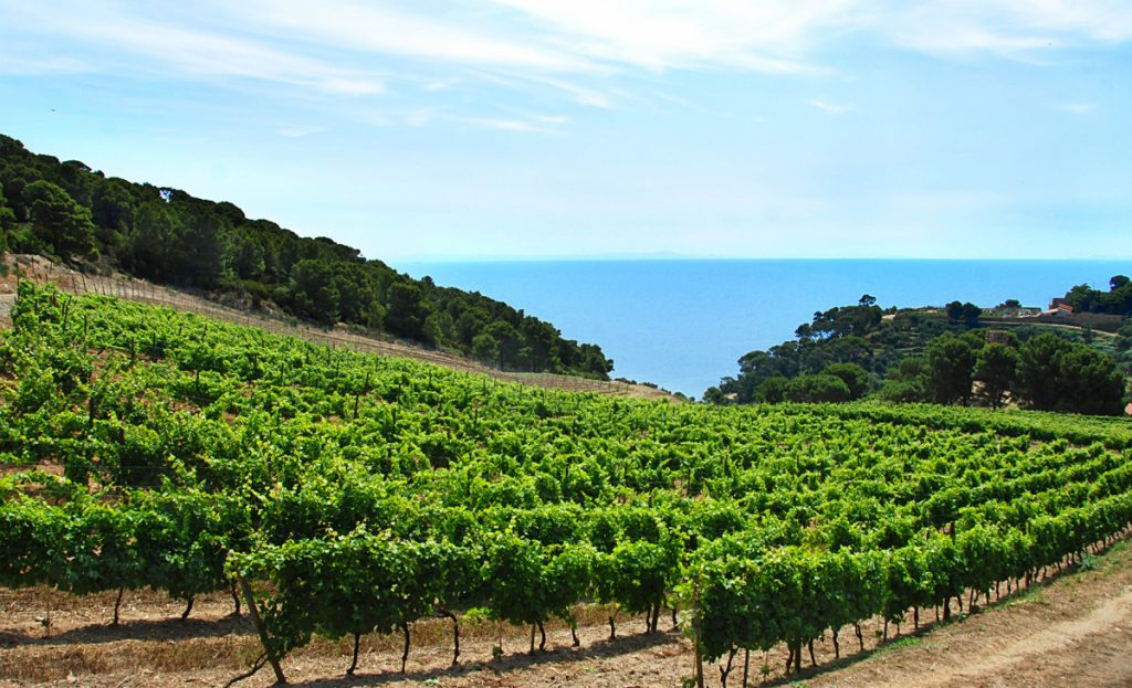 The winning sommelier or on-trade buyer will also get the chance to visit the island of Gorgona