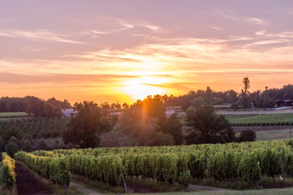 The perfect sunset breaks out over the vineyard