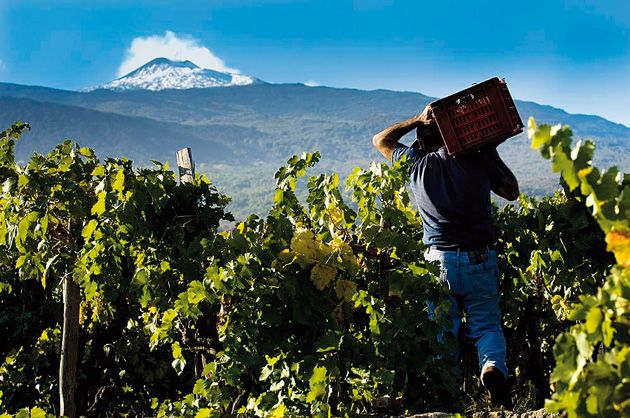 The fact there is such a difference in the styles of wine from across Italy that makes it so interesting, says Berkmann's