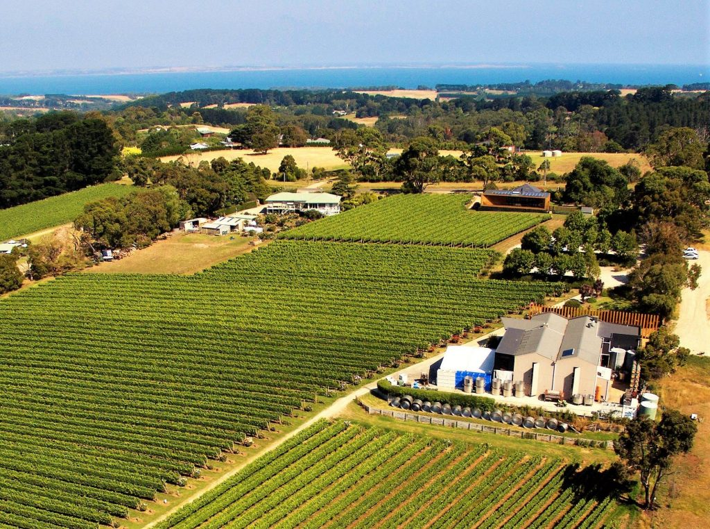 The vines here are able to benefit from the cool maritime conditions