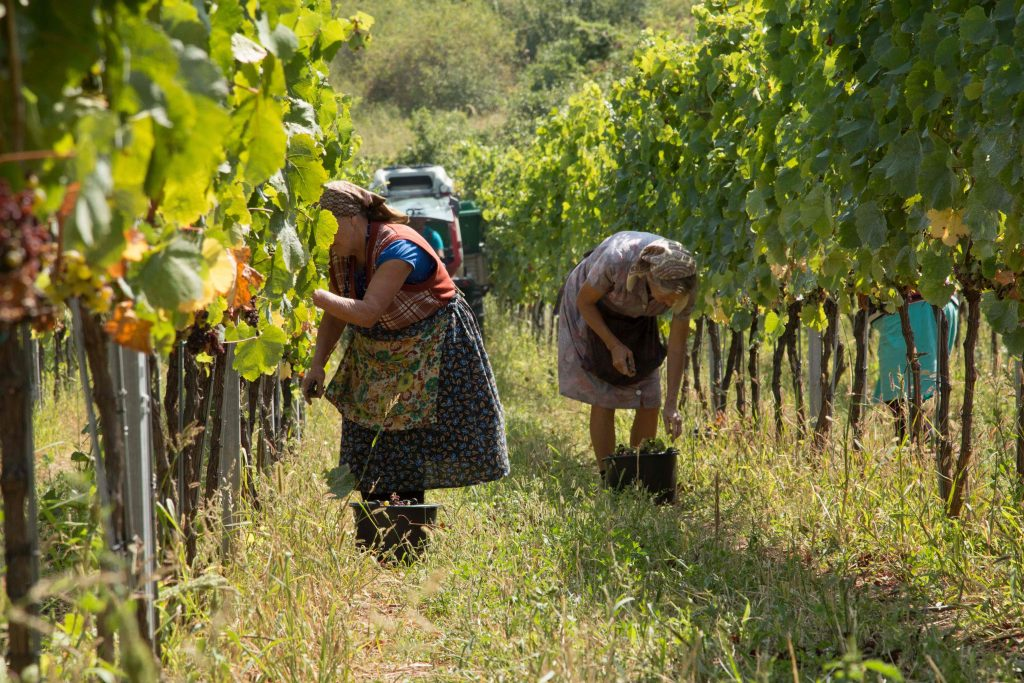 A cheaper labour force has made wines from Eastern Europe even more in demand