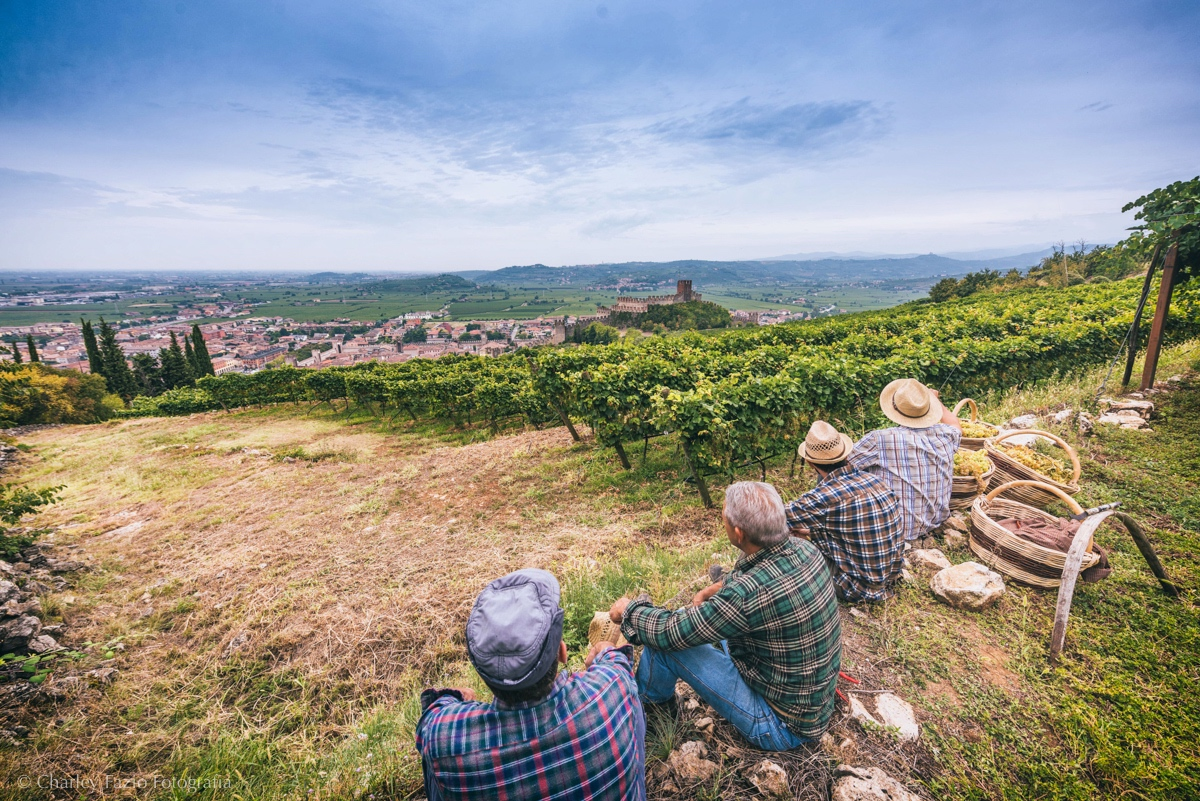 soave-workers-2