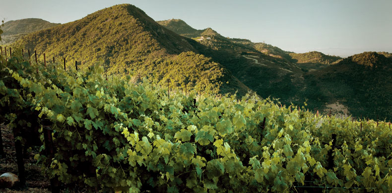 Stagecoach Vineyards is one of key acquisitions by the Gallo family in recent years