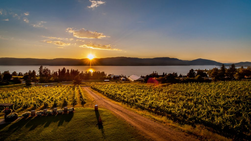 Winery with a view: Summerhill