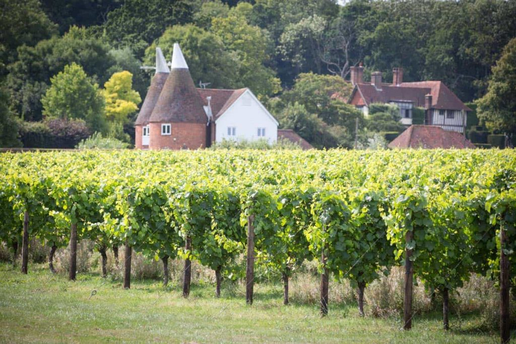 Hush Heath in Kent, one of the English vineyards being championed by the Coral Room at the Bloomsbury Hotel