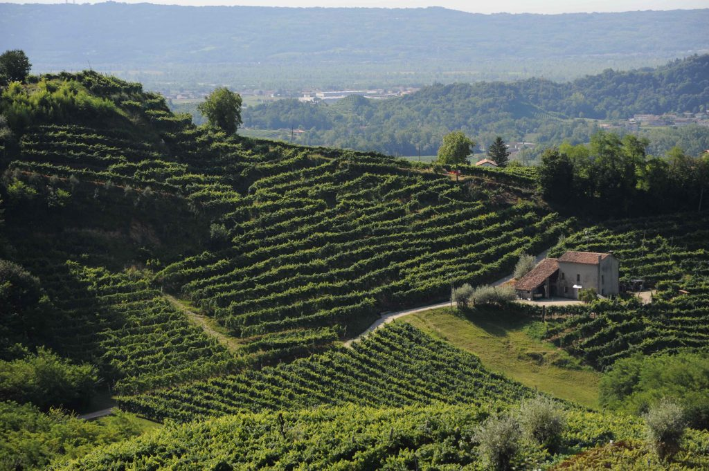 The vineyards from where Mionetto's Prosecco wines take their grapes