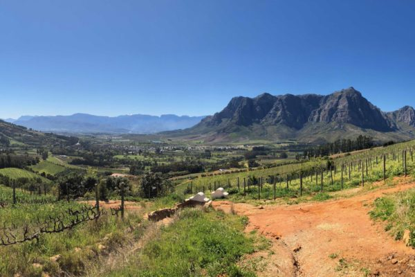 The South African landscape offers a diverse range of great quality, but also brilliant value for money wines for the premium on-trade