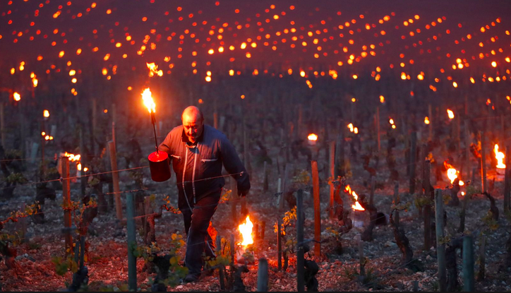 Frosts have been the curse of winemakers across Europe
