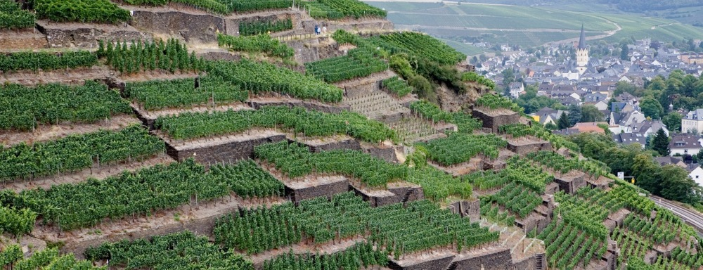 The terraced vineyards that are such a feature of the Ahr wine region