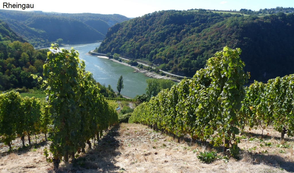 The beautiful Rheingau valley is featured in the Get It On tasting