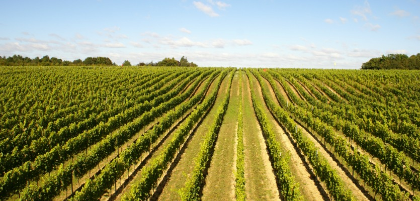 Hattingley Valley produces Chardonnay, Pinot Noir and Pinot Meunier in over 24 hectares in Hampshire