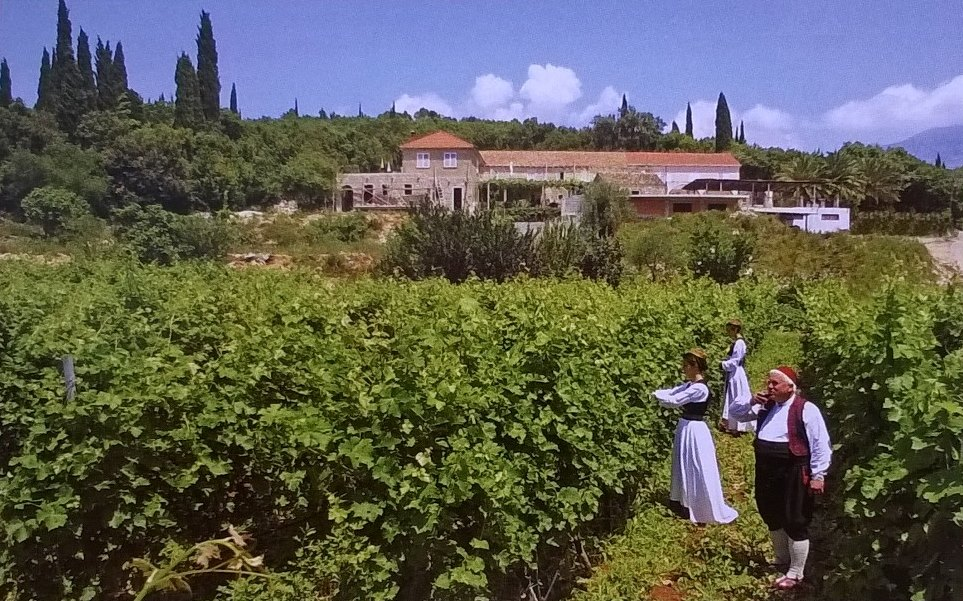 "Croatia's wines offer a ""fascinating blend"" of indigenous and international varieties from its four main wine regions, according to Bibendum's wine buyer for the region, Jamie Avenell"